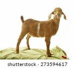 goat | Shutterstock . vector #273594617