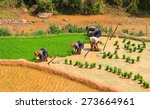 rice planting | Shutterstock . vector #273664961