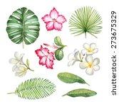 watercolor illustrations of... | Shutterstock . vector #273675329