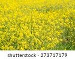 close up of yellow rape flowers ... | Shutterstock . vector #273717179