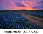 bluebonnets in the texas hill... | Shutterstock . vector #273777557