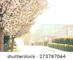 blooming trees in city streets...   Shutterstock . vector #273787064