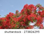 The Flame Tree Flower