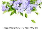 purple periwinkle isolated on... | Shutterstock . vector #273879944