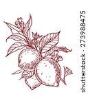 vector sketch of lemon | Shutterstock .eps vector #273988475
