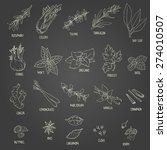 set of hand drawn spices  bay ... | Shutterstock .eps vector #274010507