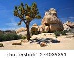 A Lone Joshua Tree   On A Sunny ...