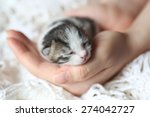 Kitten On A Palm Of A Hand