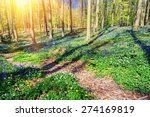 Spring Forest Path Covered By...