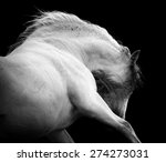 andalusian expressive horse... | Shutterstock . vector #274273031
