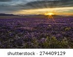Sunset Over A Field Of Flowers