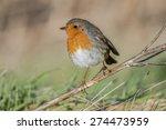 robin  erithacus rubecula ... | Shutterstock . vector #274473959