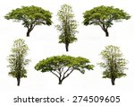 collection of trees isolated on ... | Shutterstock . vector #274509605
