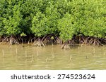 Young Mangrove Trees In Forest...