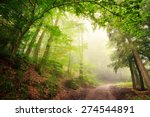 Scenic Forest Landscape With A...