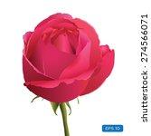 rose flower isolated   Shutterstock .eps vector #274566071