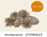 vector sketch of pine nuts | Shutterstock .eps vector #274580615