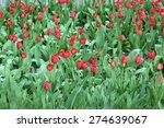 red tulips in garden  close up | Shutterstock . vector #274639067