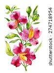 alstroemeria flower plant... | Shutterstock .eps vector #274718954