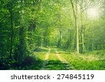 beech forest in the springtime... | Shutterstock . vector #274845119