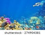 wonderful and beautiful... | Shutterstock . vector #274904381