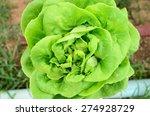 organic vegetables    Shutterstock . vector #274928729