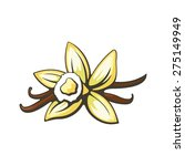 vanilla flower and pods. vector ... | Shutterstock .eps vector #275149949