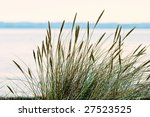 Grass Turf On The Beach In...