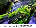 tree trunk with moss | Shutterstock . vector #275273069