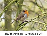 robin  erithacus rubecula  on a ... | Shutterstock . vector #275316629