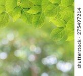 soft focus natural green... | Shutterstock . vector #275497214
