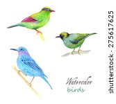 watercolor bird collection for... | Shutterstock .eps vector #275617625