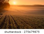 Early Morning Over Fields In...
