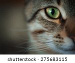 closeup of tabby cat face....   Shutterstock . vector #275683115