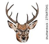 whitetail deer head. vector... | Shutterstock .eps vector #275697041