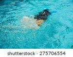 children having fun to the... | Shutterstock . vector #275706554