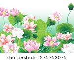 lotus paintings vector of hand... | Shutterstock .eps vector #275753075