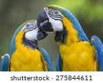 Colourful Parrot Birds.