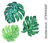 3 vector tropical palm leaves.... | Shutterstock .eps vector #275954369