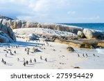 flock of small african penguins ... | Shutterstock . vector #275954429