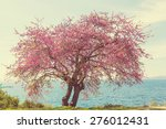 Redbud Tree Pink Flowers ...