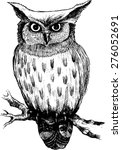 Vector Owl On A Branch 3. White ...