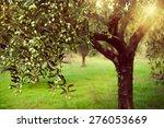 vintage toned image of olive... | Shutterstock . vector #276053669