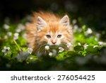 Stock photo little red kitten in flowers 276054425