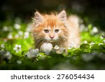 Stock photo little red kitten sitting in flowers 276054434