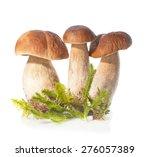 Three Boletus Edulis Mushroom...