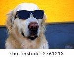 funny photo of a golden... | Shutterstock . vector #2761213