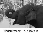 Small photo of Thai elephant smile to make merry.