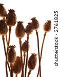poppy seed pod isolated against ...   Shutterstock . vector #2761825
