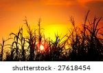the bulrushes against sunlight... | Shutterstock . vector #27618454